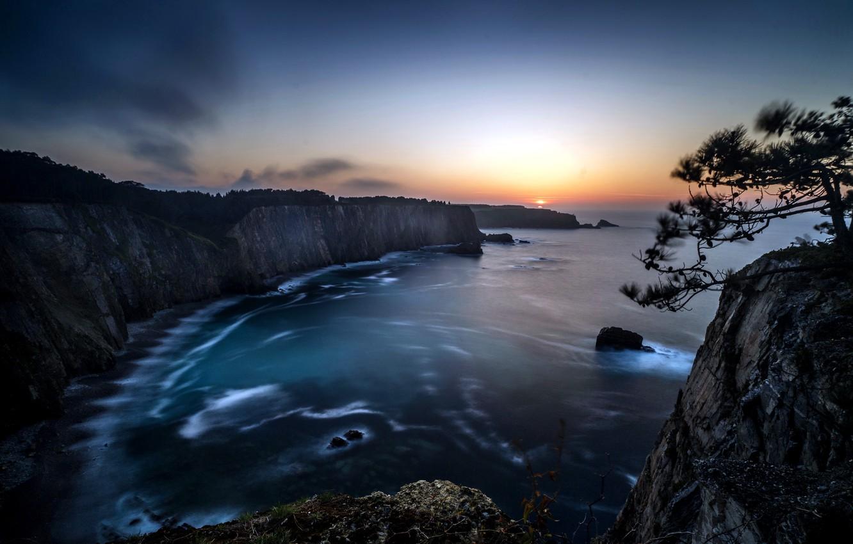 Photo wallpaper sea, sunset, tree, shore