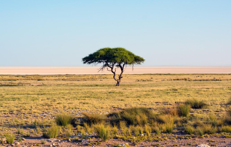 Photo wallpaper sand, grass, tree, desert, drought, Savannah, Africa, oasis, multi monitors, Namibia, Etosha National Park, ultra …