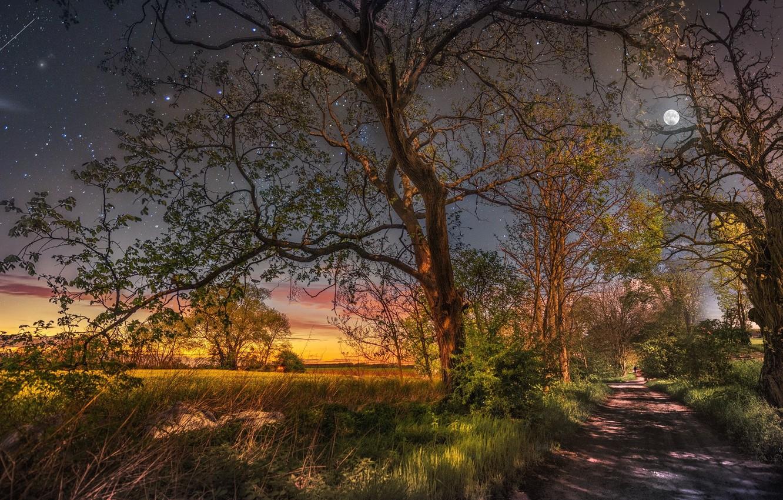 Photo wallpaper trees, the moon, starry sky