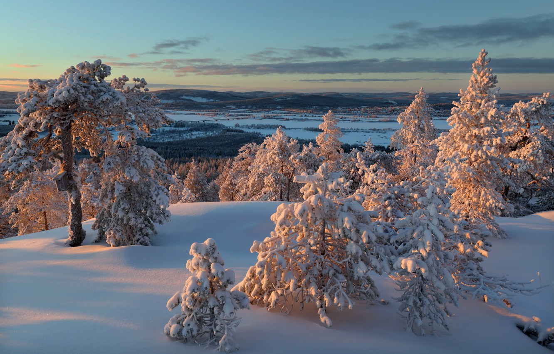 Photo wallpaper winter, snow, trees, nature