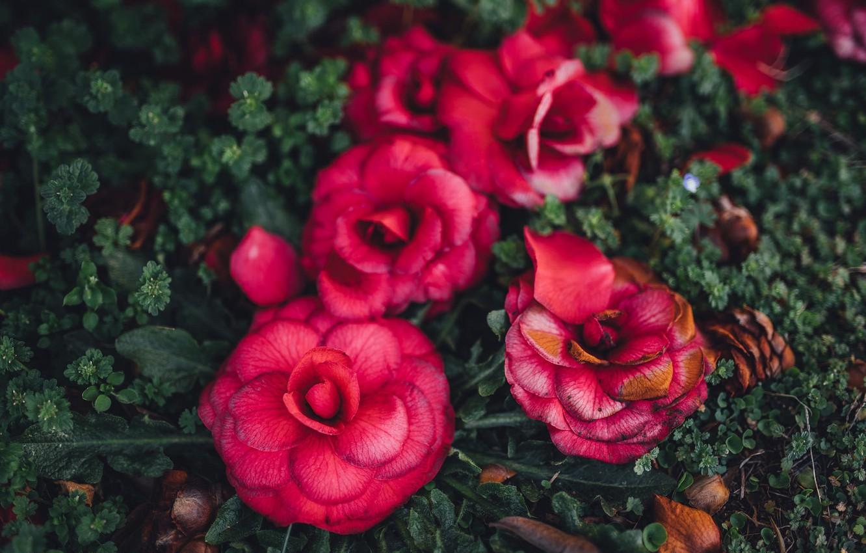 Photo wallpaper flowers, petals, pink