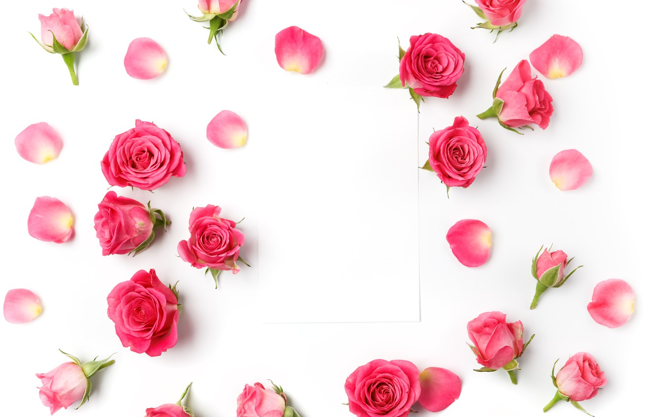 Photo wallpaper roses, buds, pink, flowers, romantic, roses