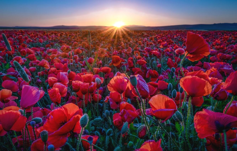 Photo wallpaper the sun, sunset, Maki, meadow
