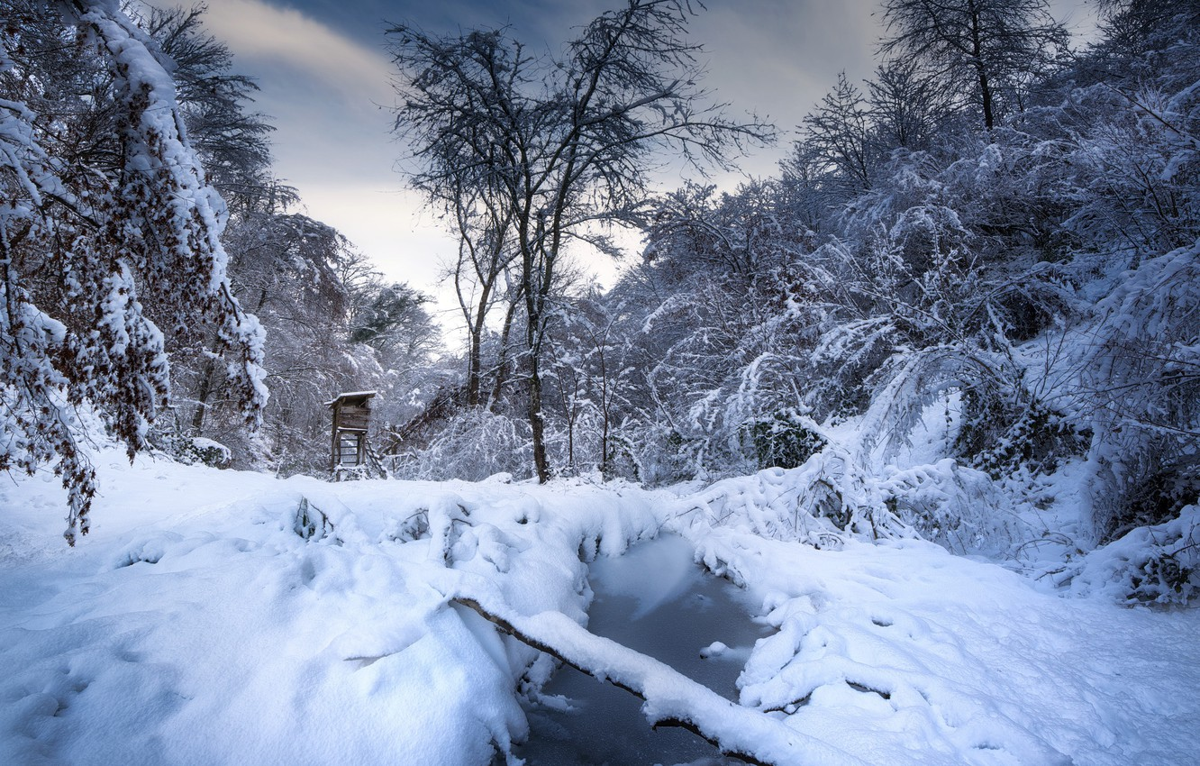 Photo wallpaper winter, forest, snow, tower