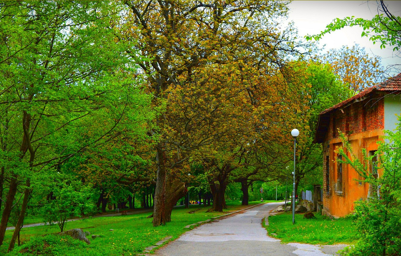 Photo wallpaper Greens, Spring, Trees, Park, Track, Green, Park, Spring, Trees, Path