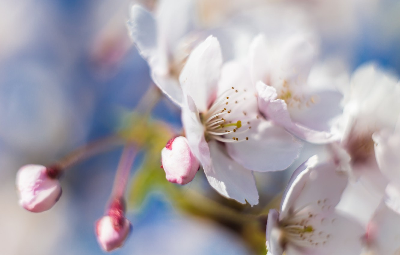 Photo wallpaper macro, flowers, branches, nature, tree, spring
