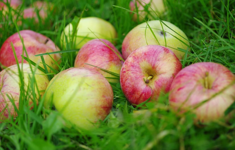 Photo wallpaper grass, apples, fruit