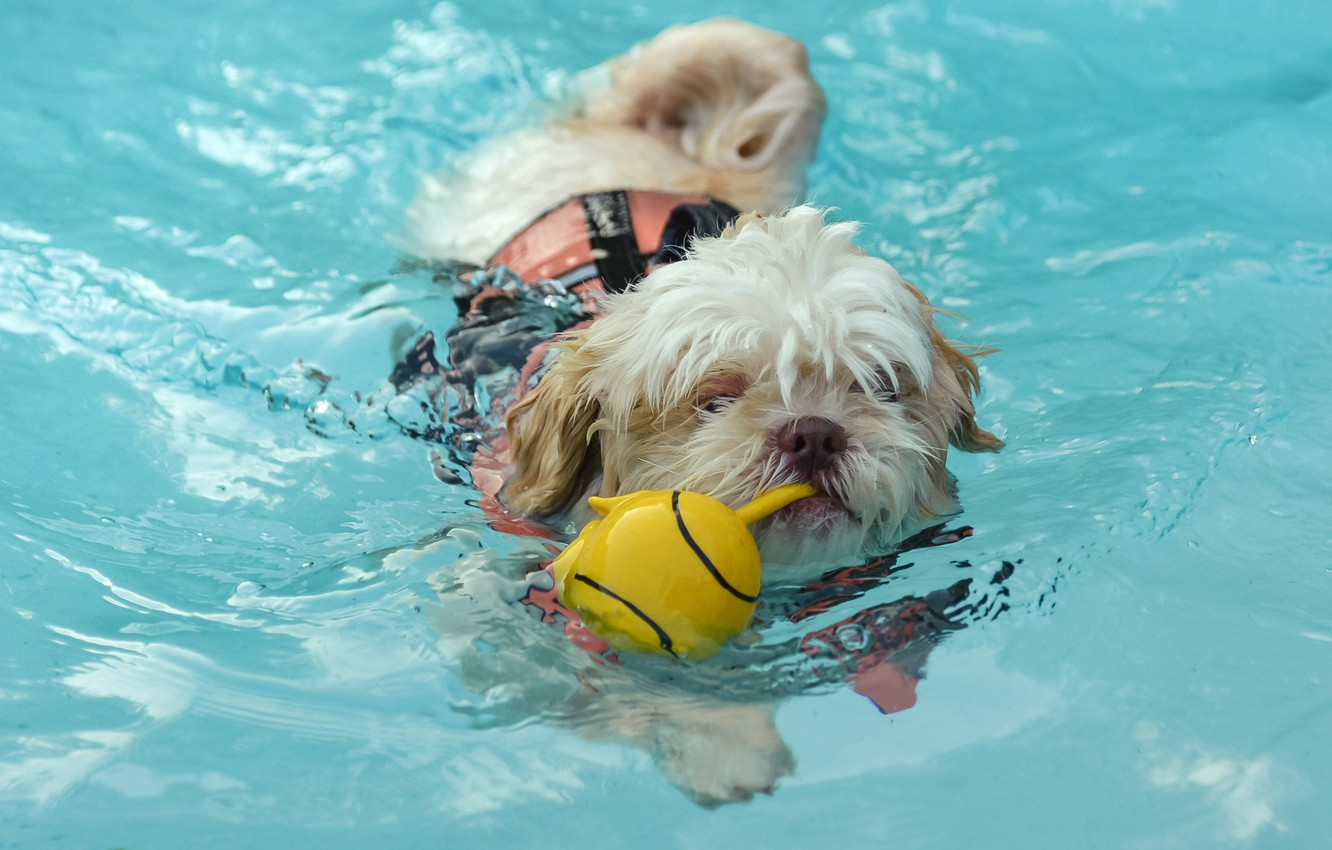 Photo wallpaper water, toy, dog