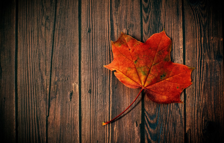 Photo wallpaper autumn, hdr, wood, maple leaf, maple leaf