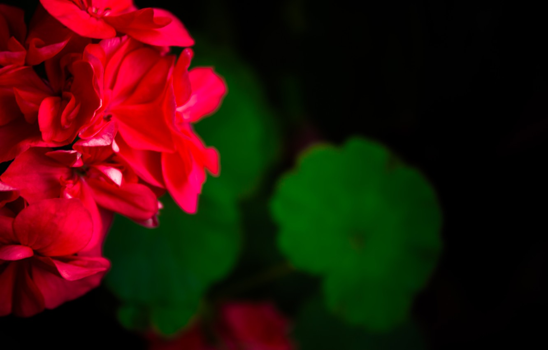 Photo wallpaper flowers, green, Wallpaper, red, flower, flowers, cool