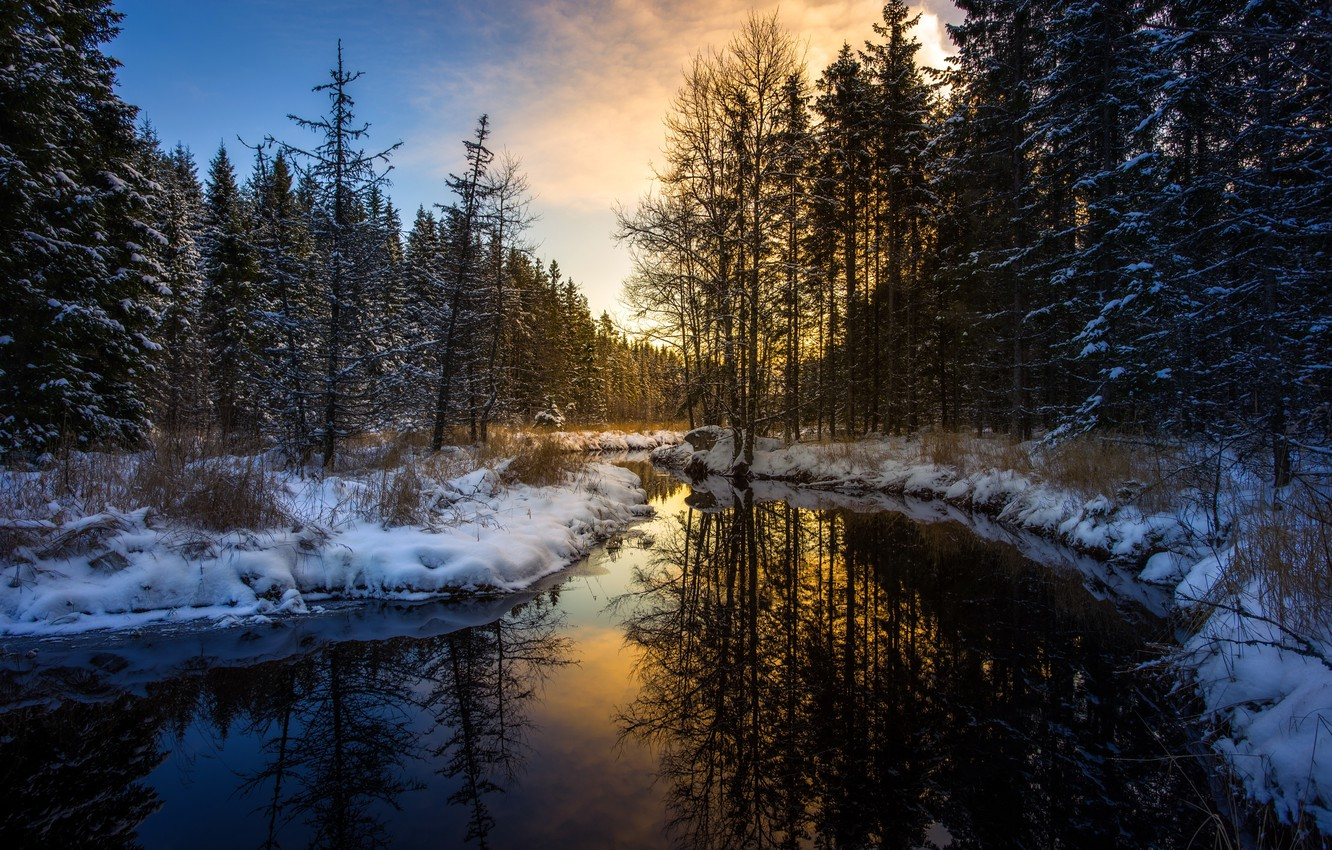 Photo wallpaper winter, forest, river, morning