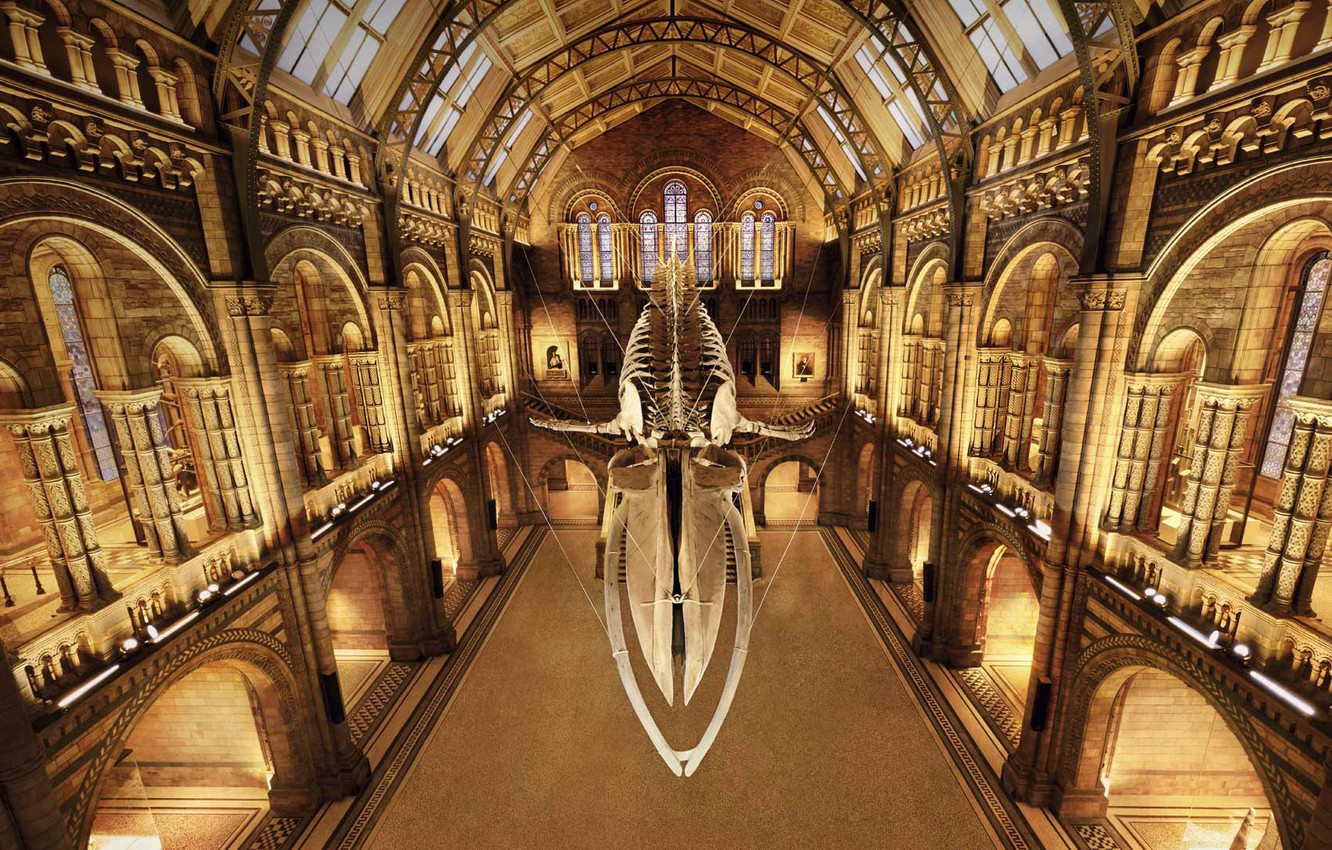 Photo wallpaper London, Museum of natural history, the skeleton of a whale