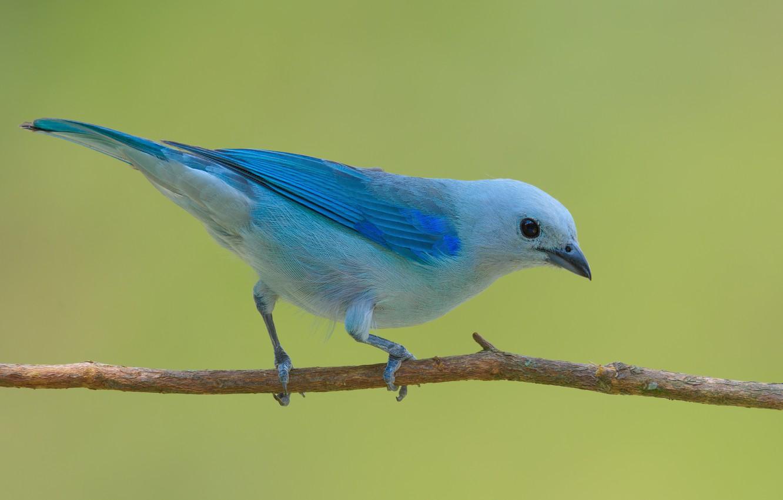 Photo wallpaper bird, branch, sitting