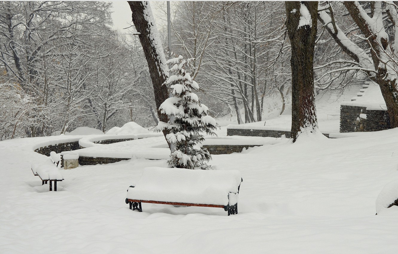 Photo wallpaper Winter, Trees, Snow, Park, Frost, Winter, Frost, Park, Snow, Benches, The snow