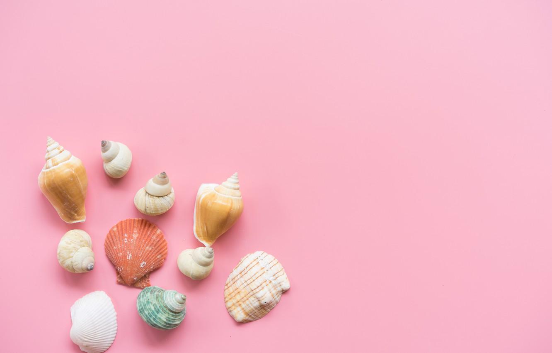 Photo wallpaper background, pink, shell, pink, background, marine, seashells