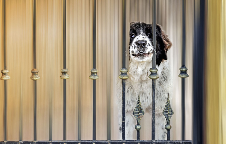 Photo wallpaper the fence, dog, dog