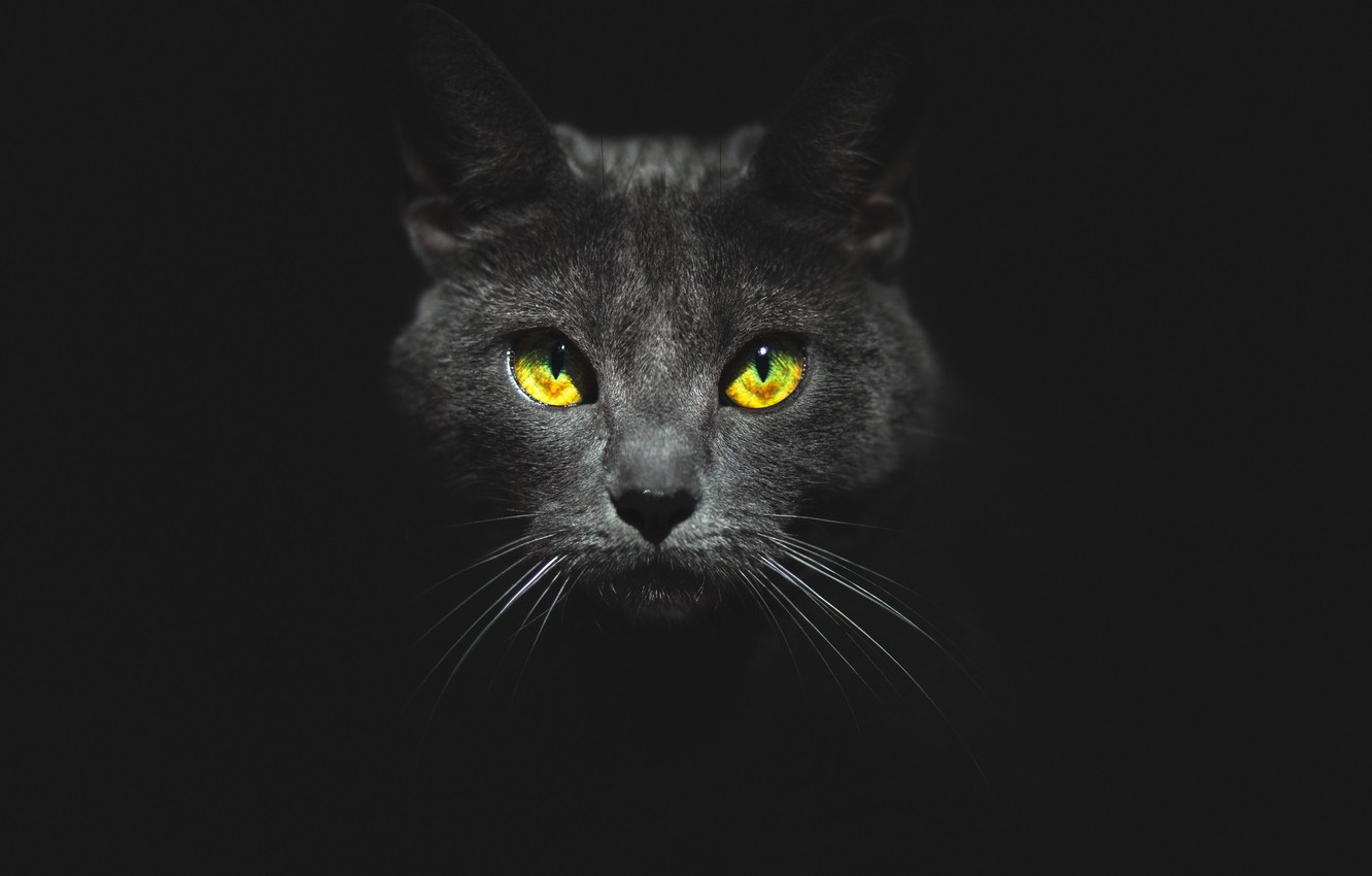 Photo wallpaper eyes, cat, look, face, black background, Kote