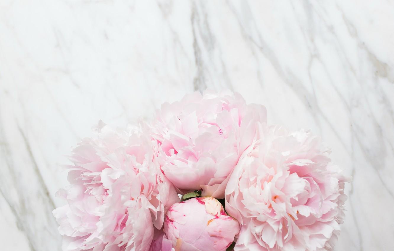Photo wallpaper flowers, bouquet, marble, pink, flowers, peonies, peonies, tender, marble
