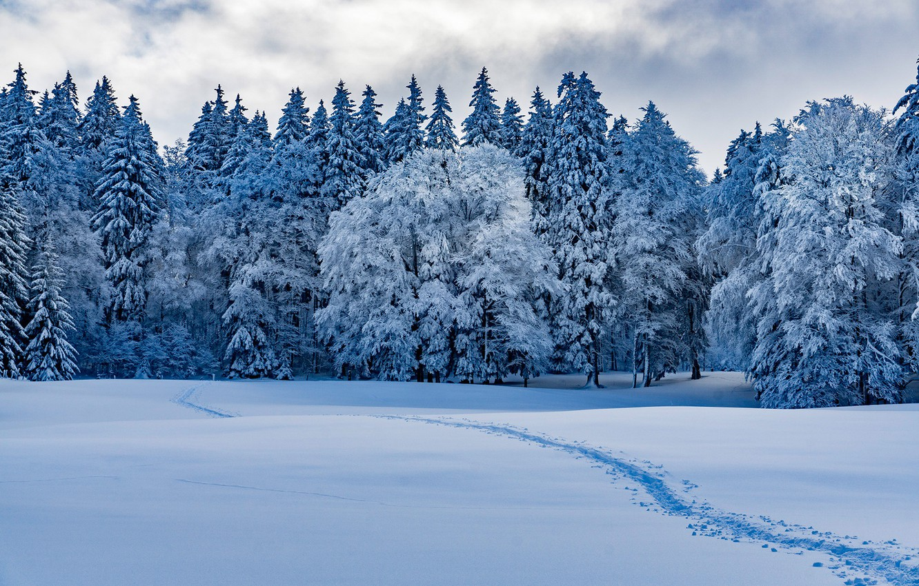 Photo wallpaper winter, forest, snow, trees, Switzerland, the snow, path, Switzerland, Provence, Provence