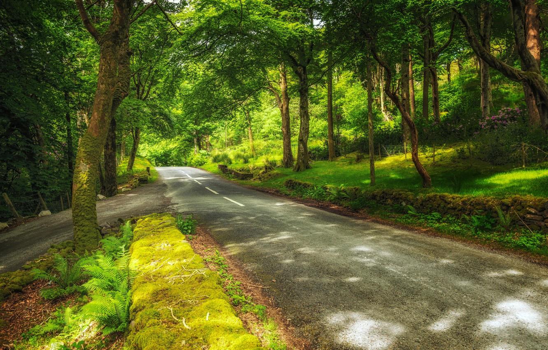 Photo wallpaper road, greens, forest, trees, Park, Switzerland, Canton of Bern, Hilterfingen