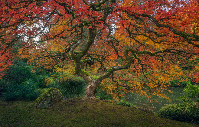 Photo wallpaper colorful, USA, grass, Oregon, nature, Portland, park, autumn, lake, rocks, leaves, tree, garden, color, branches, …