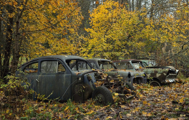 Photo wallpaper autumn, forest, machine
