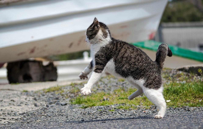 Photo wallpaper cat, pose, jump