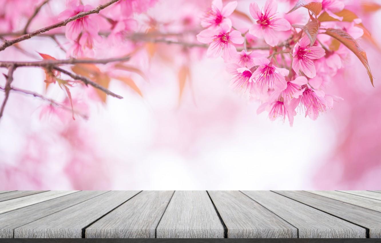 Photo wallpaper the sky, branches, spring, Sakura, flowering, pink, blossom, sakura, cherry, spring, bloom, vintag