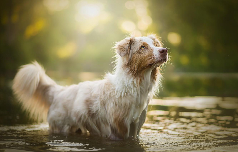 Photo wallpaper water, glare, dog, bokeh, Ellie