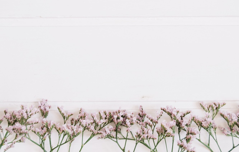 Photo wallpaper flowers, background, twigs