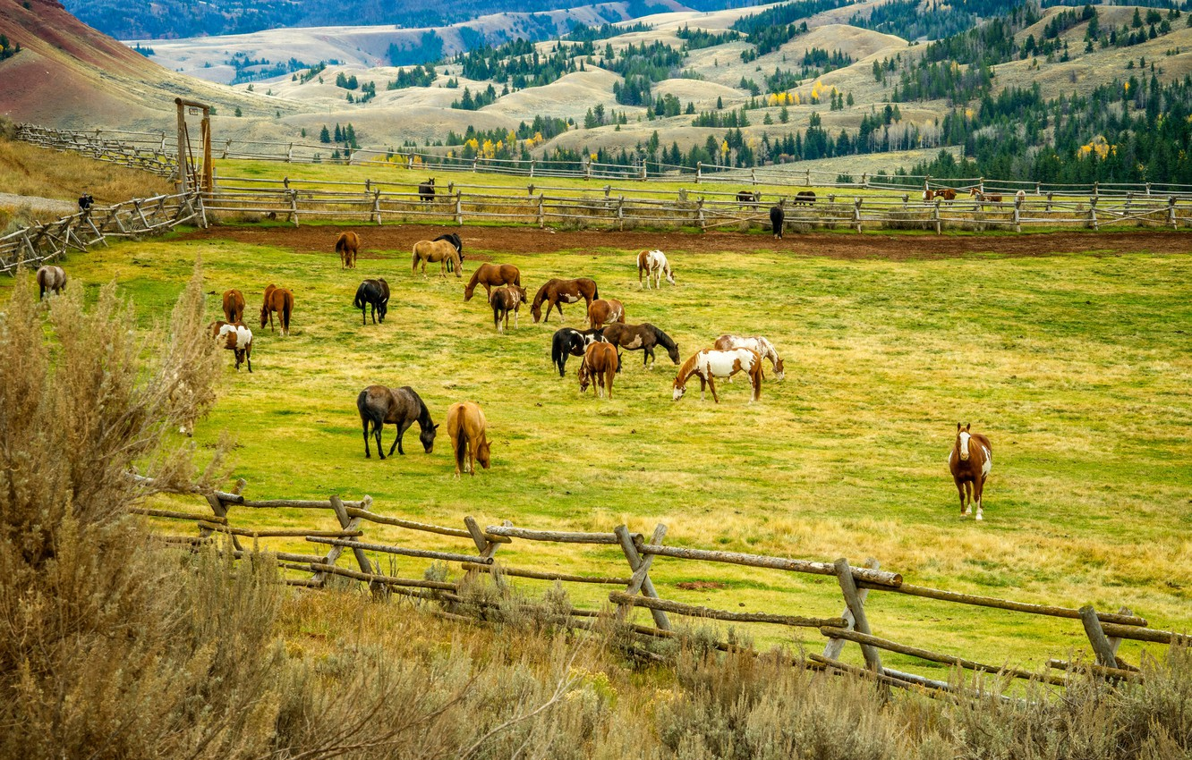 Photo wallpaper trees, landscape, nature, hills, field, horse, corral, fence