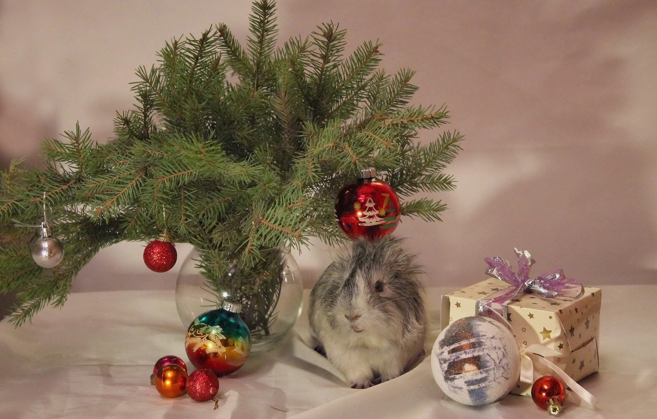 Photo wallpaper winter, animals, decoration, tree, new year, Christmas, Guinea pig, December, composition, Pets, pigs