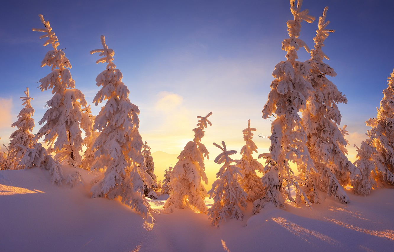 Photo wallpaper winter, the sky, rays, light, snow, branches, blue, beauty, tale, ate, frost, the snow, shadows, …