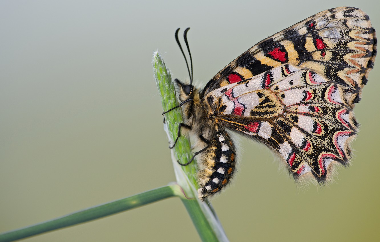 Photo wallpaper macro, butterfly, insects, nature, background, pattern, butterfly, light, profile, insect, colorful, stem, motley
