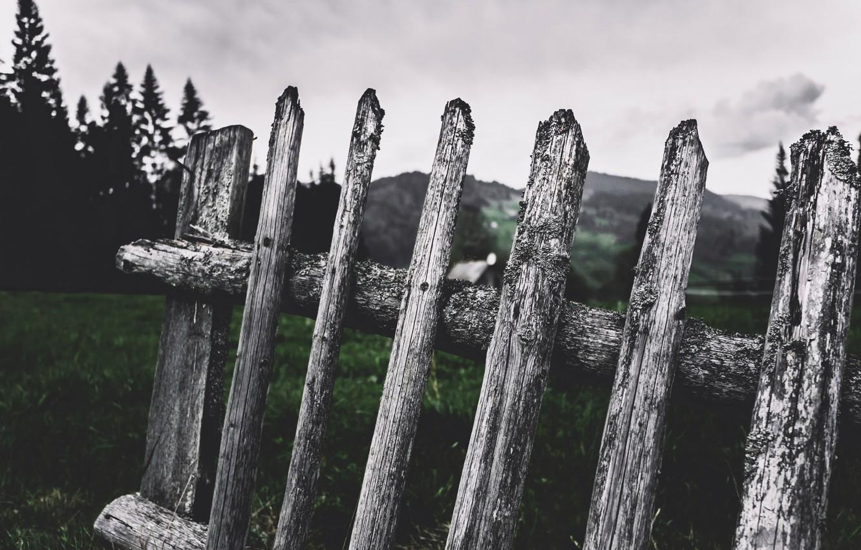 Photo wallpaper the fence, Cornelia Pavlyshyn, fence
