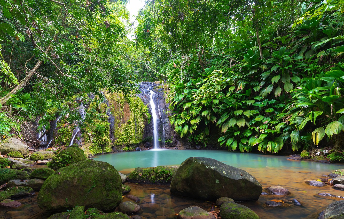 Photo wallpaper greens, forest, tropics, stream, stones, foliage, waterfall, moss, the bushes, Guadeloupe, Sainte-Rose, Cascade Bis