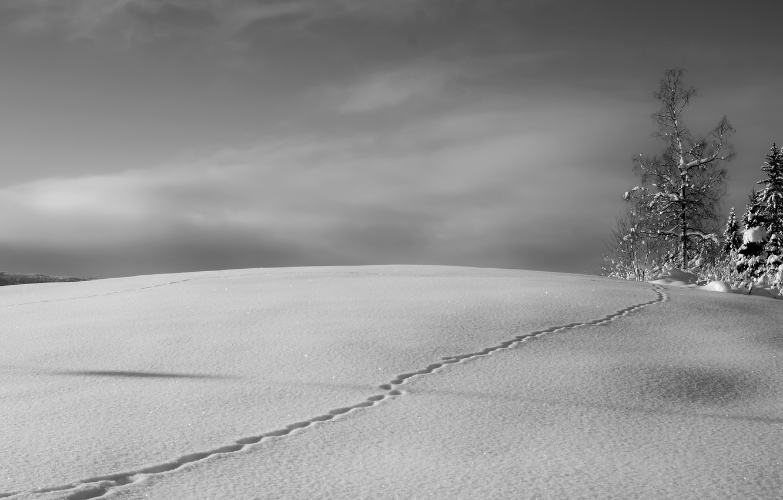 Photo wallpaper winter, snow, tree, trail