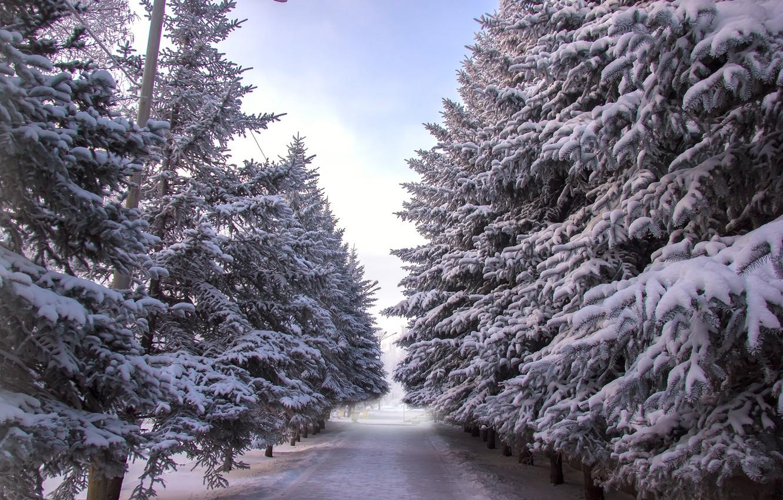 Photo wallpaper winter, Park, tree