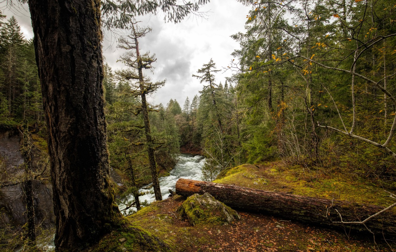 Photo wallpaper forest, leaves, trees, river, for, moss, Canada, Vancouver Island, National Parks