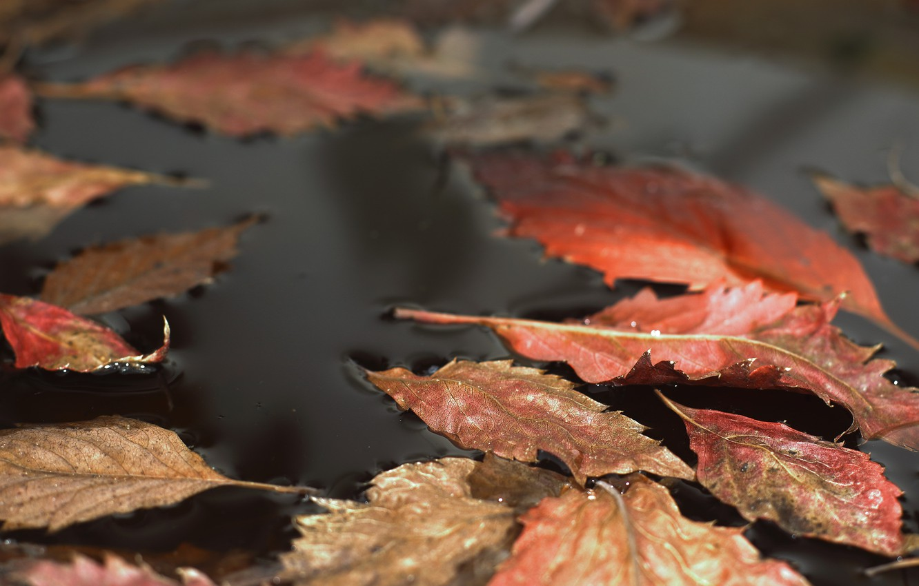 Photo wallpaper leaves, nature, puddle