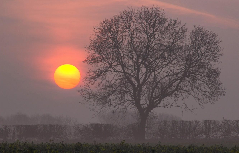 Photo wallpaper the sun, tree, dawn, morning