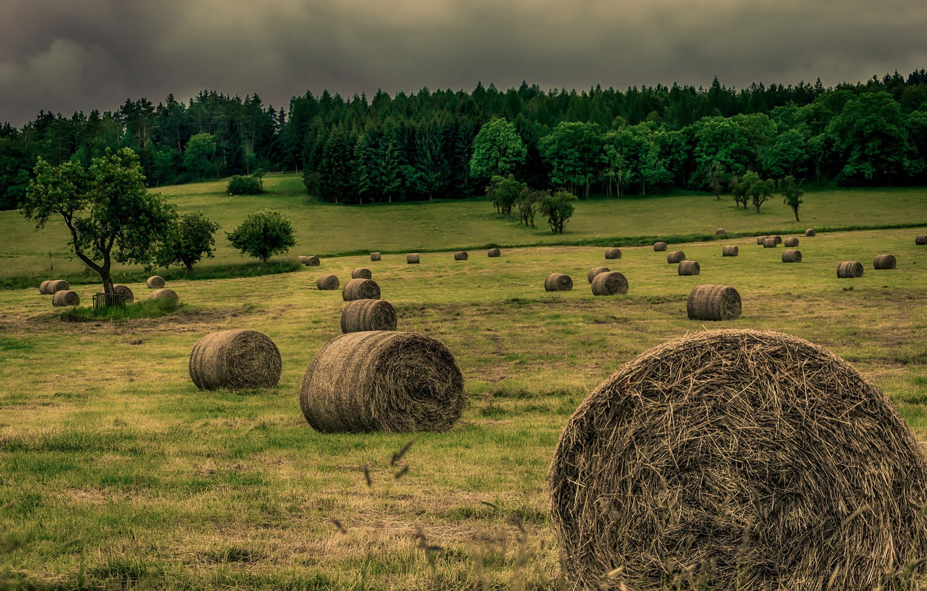 Photo wallpaper field, the evening, hay