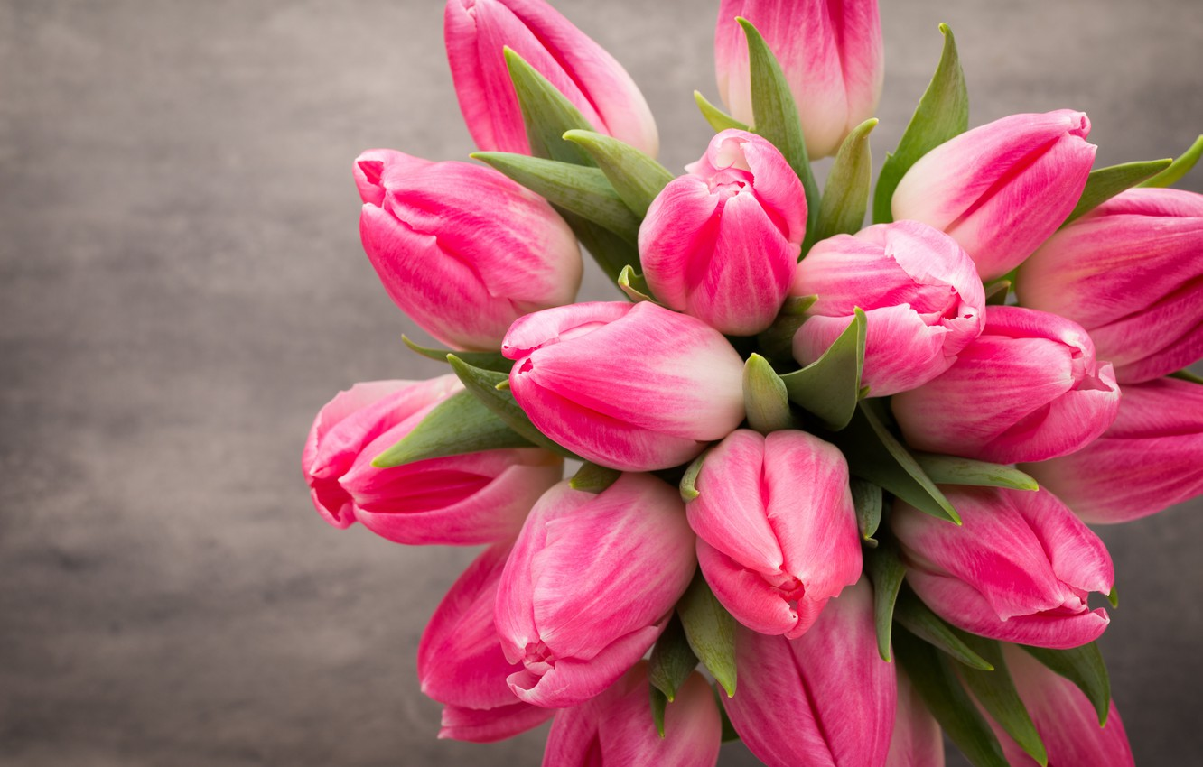 Wallpaper Flowers Bouquet Tulips Pink White Fresh Flowers