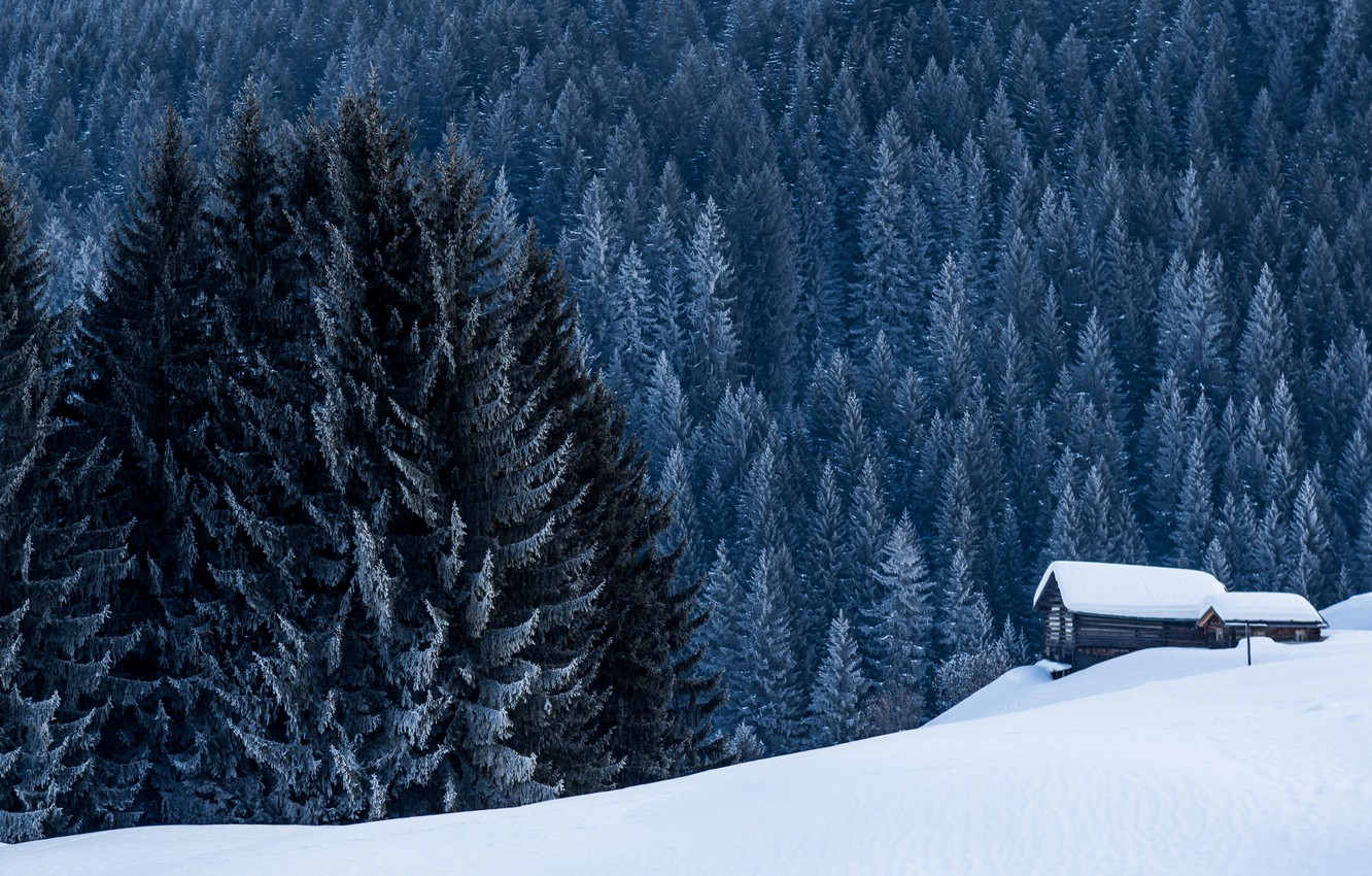 Photo wallpaper winter, forest, house