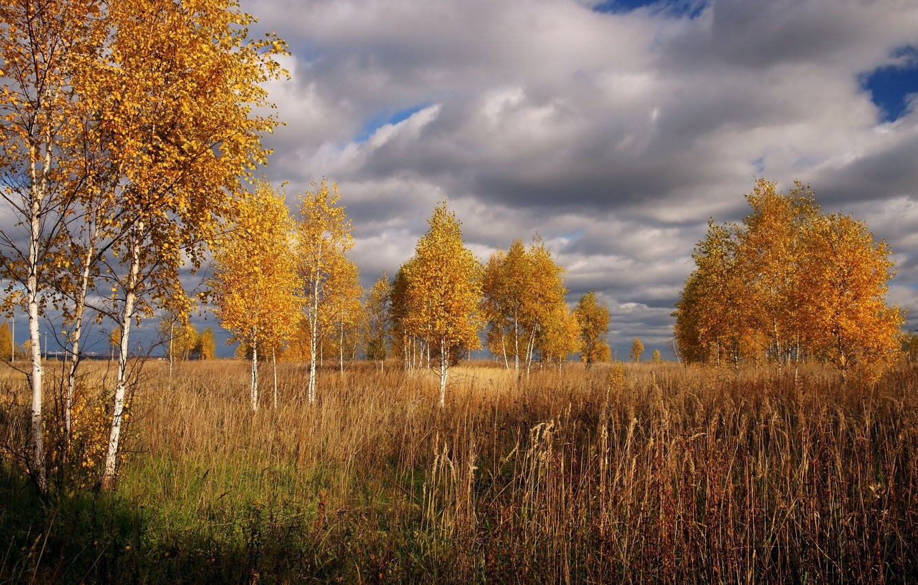 Photo wallpaper The sky, Clouds, Autumn, Trees, Clouds, Sky, Fall, Autumn, Trees