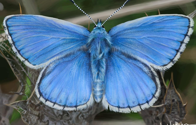 Photo wallpaper art, John LaBrada, Blue Butterfly