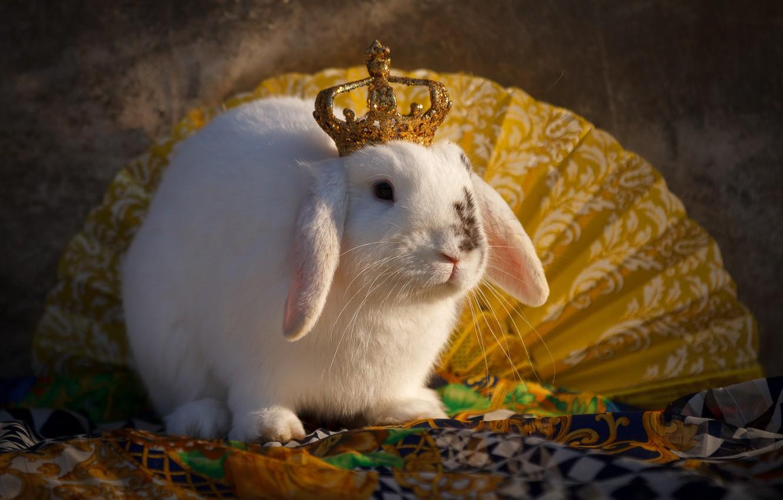 Photo wallpaper animal, crown, rabbit