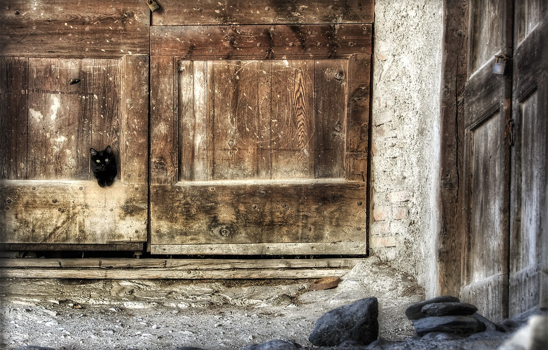 Photo wallpaper cat, house, the door
