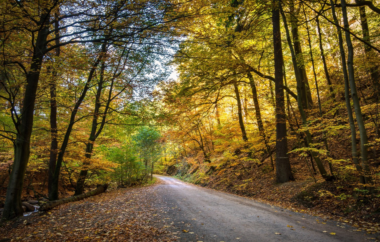 Photo wallpaper autumn, leaves, sunset, foliage, yellow leaves, hdr, road in the forest, ultra hd, autumn in …