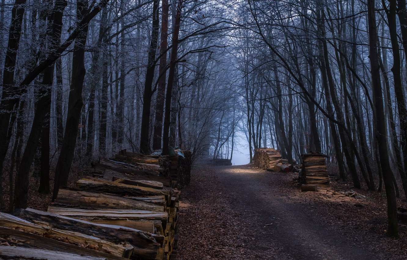 Photo wallpaper Autumn, Forest, Fall, Track, Autumn, Forest, Path, Wood